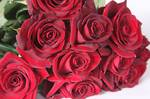Dozen Red Roses  SOLD OUT SORRY